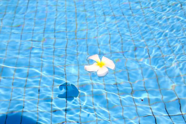 水泳で痩せることが効果的な5つのわけ