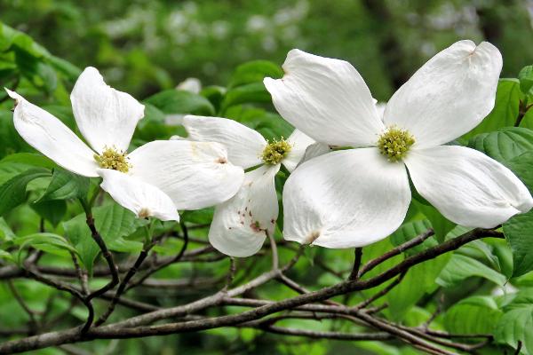 花言葉で片思いを伝えるのはこの5つの花