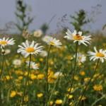 花言葉でごめんなさいを伝えるのならこの5つの花